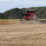 Dry bean combine farm machine going through a field to directly harvest white beans