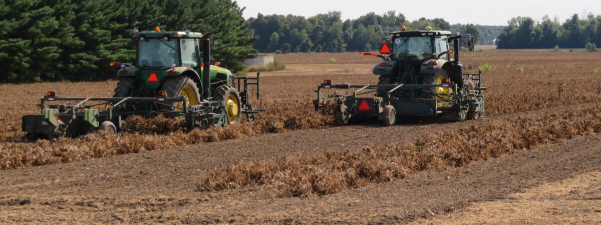 Two machines harvesting a field crop