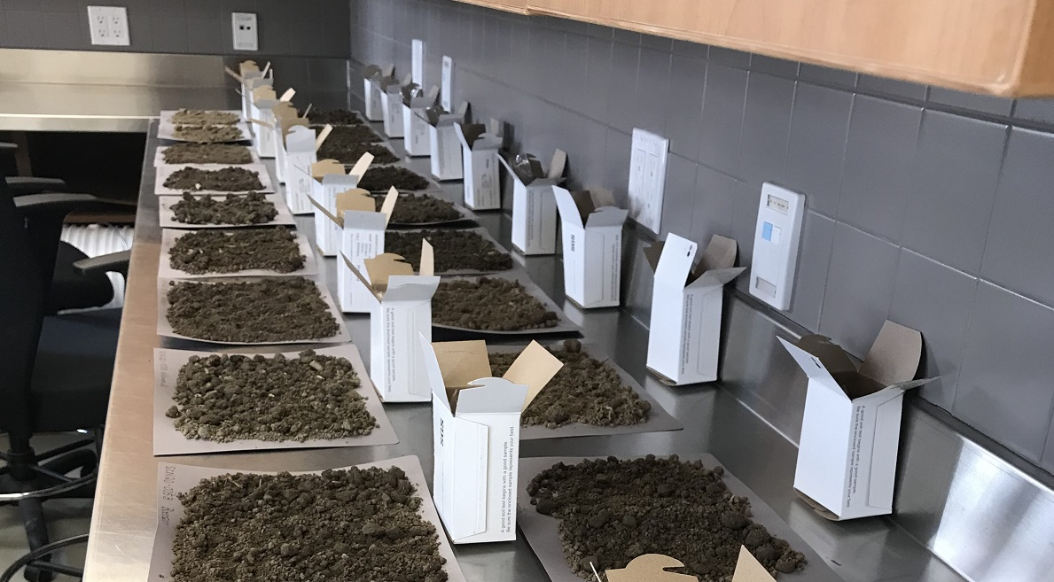Two rows of soil samples on a lab bench